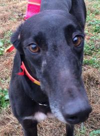 Welcome to Greyhound Adoption